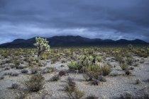 Blick auf Wüstenlandschaft und Berge gegen dramatischen Himmel, Mojave-Wüste, Nevada, USA — Stockfoto
