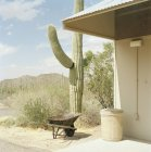 Tall cactus plant growing next to building in desert scene — Stock Photo