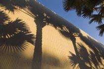 Высокий угол зрения тени пальмовых деревьев на стене гофрированные — стоковое фото