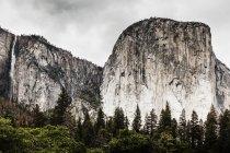Vista panorâmica da floresta de abetos ao lado de falésias altas da montanha no dia nublado — Fotografia de Stock