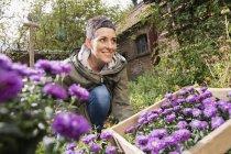 Happy woman planting purple flowers in back yard — Stock Photo