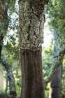 Detail of tree trunk in forest — Stock Photo