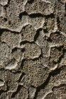 Colpo pieno del telaio della superficie del tronco d'albero — Foto stock