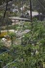 Mostra attraverso la recinzione di un recinto di animali allo zoo — Foto stock