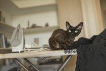 Портрет кота, сидящего дома на железной доске — стоковое фото
