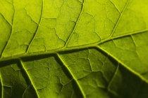 Полный кадр выстрел из свежих листьев — стоковое фото