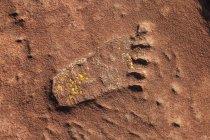 Vista ravvicinata dell'impronta sulla superficie rocciosa rossa — Foto stock