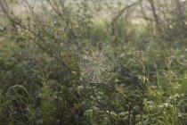 Primo piano di ragnatela sulle piante — Foto stock