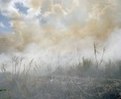View to aftermath of brush fire at nature — Stock Photo
