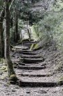 Visão de baixo ângulo de passos antigos em meio a árvores na floresta — Fotografia de Stock