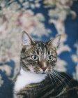 Портрет кота хтось дивитися вбік — стокове фото