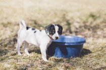 Portrait of puppy standing by blue container on field — Stock Photo