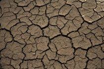 Colpo pieno del telaio di terra incrinata arida — Foto stock