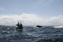 Men in boat watching whale swimming in sea — Stock Photo