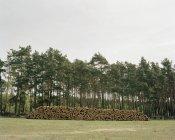 Holzstapel im malerischen Waldtal — Stockfoto