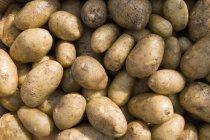 Tiro de quadro completo de batatas cruas em sumlight — Fotografia de Stock