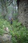 Задній вид людей Піші прогулянки по глибині лісу — стокове фото