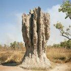 Формирование огромный муравейник на светлой природе — стоковое фото
