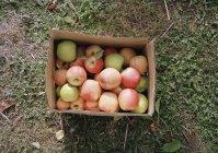 Vue de dessus de boîte avec pommes mûres sur terrain — Photo de stock