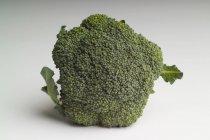 Fresh broccoli on white backdrop — Stock Photo