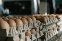 Vista de perto de pilhas de ovos em caixas de ovos — Fotografia de Stock