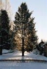 Yarda del sol brillando a través de árboles en el frente en invierno - foto de stock
