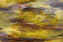 Algues de plein cadre flottant dans l'eau — Photo de stock