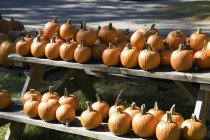 Pumpkins arranged on wooden picnic table — Stock Photo