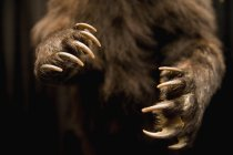 Close up view of staffed bear paws — Stock Photo