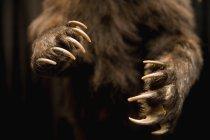 Close-up vista de patas de urso pessoal — Fotografia de Stock