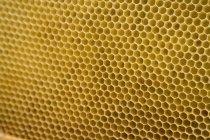 Fotograma completo de panal de abeja - foto de stock