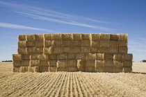 Вид спереди сложенных тюков сена в освещенном солнцем поле — стоковое фото