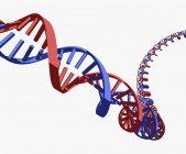 Abbildung des DNA-Strangs auf weißem Hintergrund — Stockfoto