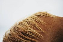 Immagine ritagliata del collo del cavallo sopra il cielo nebbioso — Foto stock