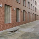 Krokodil auf Spur Weg Gebäude entlang kriechen — Stockfoto