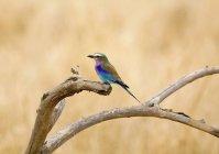 Птах сідати на філії в сонячної природи — стокове фото