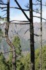 Cordillera vista a través de bosques - foto de stock