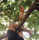 Crop child's legs wrapped around tree branch — Stock Photo
