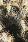 Full frame shot of sunlit cactus with long thorns — Stock Photo