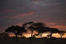 Pôr do sol cênico e silhuetas de árvores na África — Fotografia de Stock