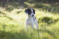 Собака стоит на травянистом поле в солнечный день — стоковое фото