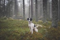 Portrait of dog sitting on grass on background of trees in forest — Stock Photo