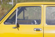 Dog sitting in yellow car and looking at camera — Stock Photo