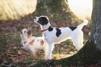 Vista laterale dei cani in piedi vicino agli alberi nella foresta durante la giornata di sole — Foto stock