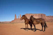 Two wild horses at scenic dessert scene — Stock Photo