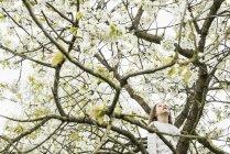 Girl climbing spring apple blossom tree — Stock Photo