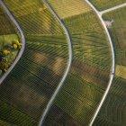 Вид сверху на текстурированные зеленые сельскохозяйственные культуры — стоковое фото