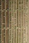 Luftaufnahme landwirtschaftliche Versuchsfelder, hohenheim, Baden-Württemberg, Deutschland — Stockfoto