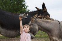 Nettes Mädchen mit Eseln, die einen ausgestopften Esel halten — Stockfoto
