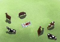 Vacas pastando y mujeres tomando el sol en el campo - foto de stock